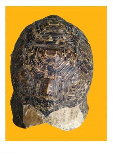 Schildkröte Johannesevangelium
